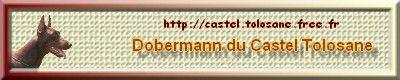 banniere castel tolosane